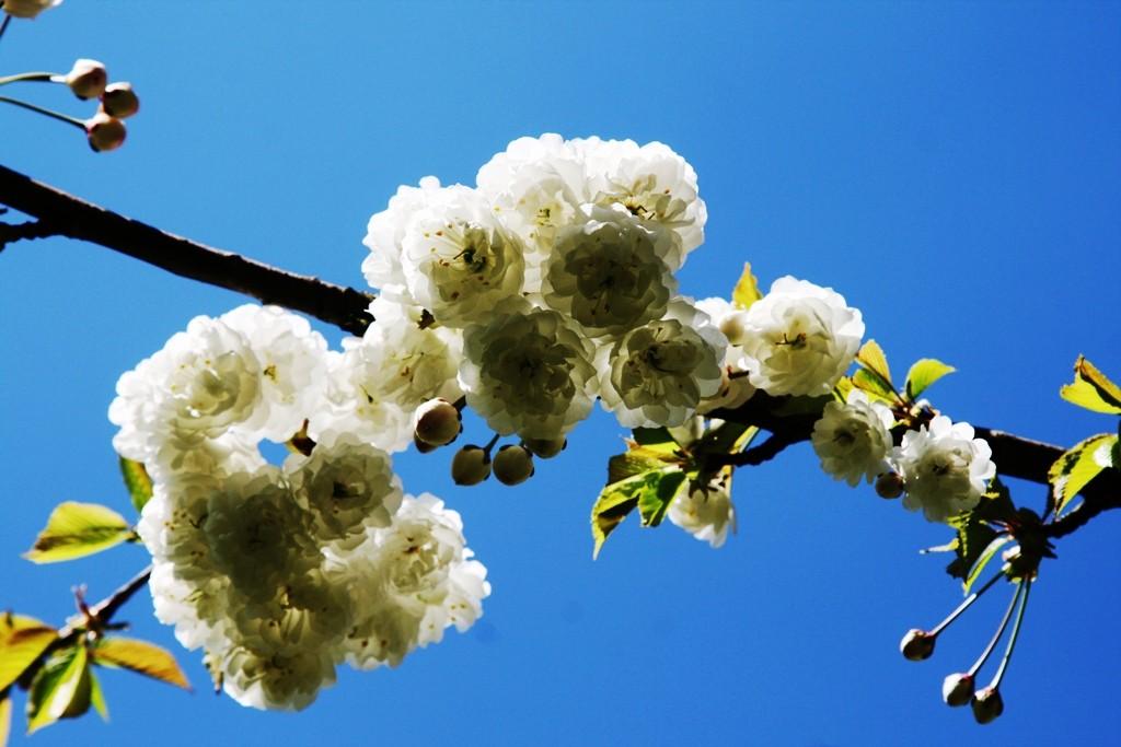 Frühlingstag
