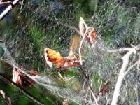 Spinnenwebe Liepnitzsee