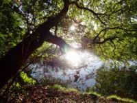 Baum Liepnitzsee