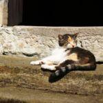 Katze macht Pause