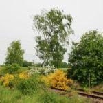 Stillgelegte Bahnstrecke zwischen Pretzsch und Dommitzsch